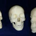 Image of 3D Printed Skull
